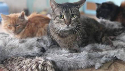 Хоспис для животных. В Рогачёвском районе нашли приют особенные кошки и собаки