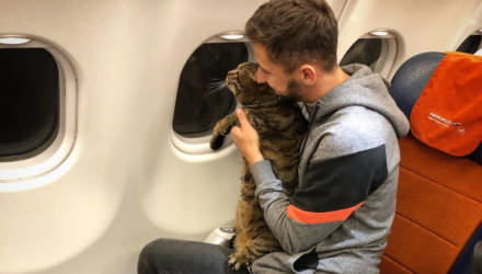 «Аэрофлот» исключил пассажира из программы лояльности за то, что тот обманом провёз в салоне слишком упитанного кота