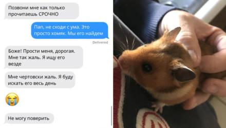 Отец потерял хомяка дочки, и вот самые смешные СМС, которые он в панике писал ей