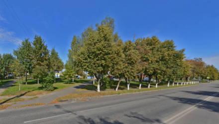 И деревья не тронуть, и парковку построить: в Гомеле сохранили липы