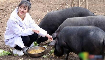 Фермер пообещал 300 свиней тому, кто женится на его дочери