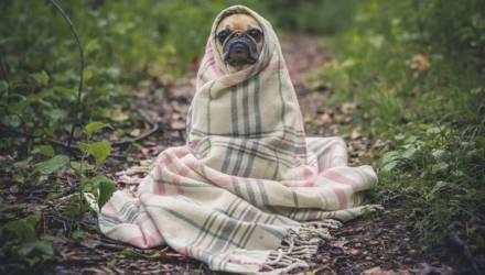 Подари им шанс: 30 ноября в ГЦК состоится благотворительная акция в поддержку бездомных животных