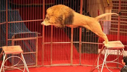 Словакия запретила использование животных в цирке