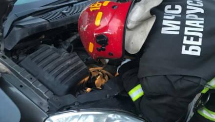 Речицкие спасатели извлекли кошку из моторного отсека автомобиля