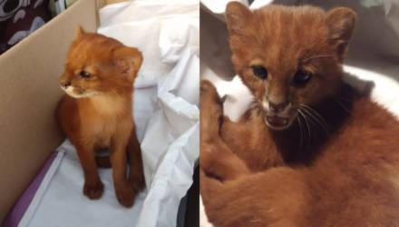 Девушка спасла с улицы котёнка и лишь у ветеринара узнала, кто он на самом деле