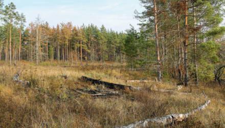 В лесу недалеко от Расовы нашли человеческие останки