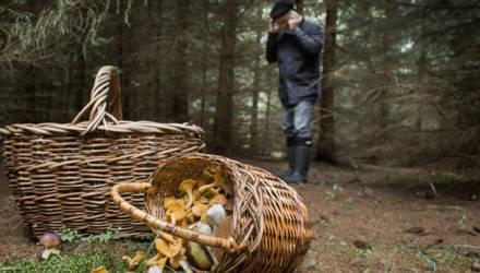 Гомельские спасатели нашли мужчину, заблудившегося в лесу