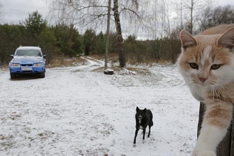 Отшельник по своей воле, или Что держит единственного жителя Лесков в деревне на Гомельщине, окружённой лесом