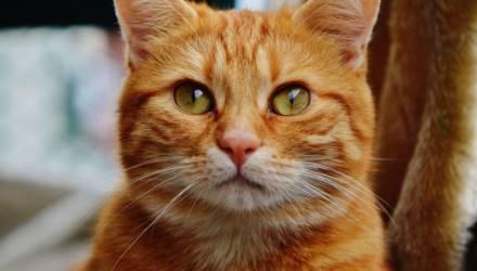 Кота с килограммовыми дредами на спине спасли волонтёры во Франции