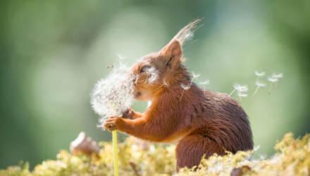 Самые смешные фотографии животных в мире: животики надорвёшь!