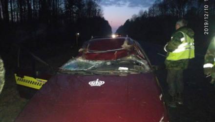 Такси и лось столкнулись в Калинковичском районе