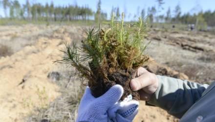 На Гомельщине более ста должностных лиц лесохозяйственных предприятий привлечены к ответственности за приписки