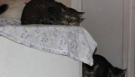 Одинокая женщина завела более 40 котов, но что-то пошло не так