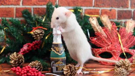 Год Белой Металлической Крысы: готовимся к встрече 2020 и привлекаем удачу
