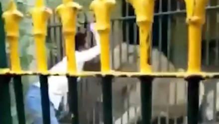 Очевидцы сняли, как лев терзает смотрителя зоопарка, которому никто не помог