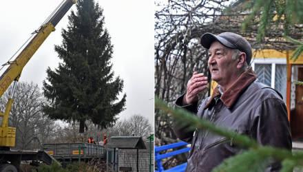 Дачник из Речицкого района подарил гомельчанам – жителям Шведской Горки новогоднюю ель. И она круче, чем на площади Ленина