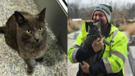 Дальнобойщик расплакался как ребёнок, увидев напарника-кота, которого он потерял