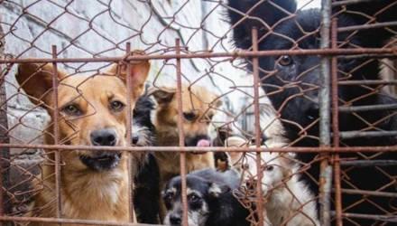 Чтобы купить будки для собак, девушка из Светлогорска участвует в конкурсе известного портала
