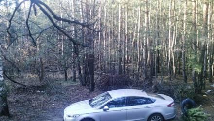 В Светлогорском районе мужчина на дорогой иномарке захотел дома поставить бесплатную ёлку, но в лесу попал в объектив фотоловушки