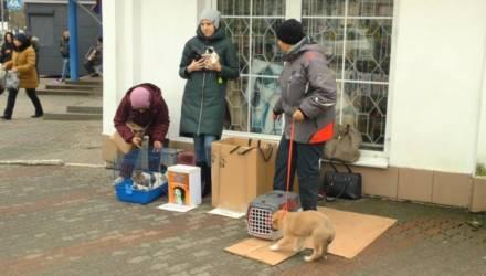 Неравнодушные к проблеме бездомных котов мозыряне подготовили петицию. Её подписали сотни человек