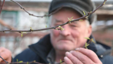 Так себе зима: в Гомельской области зацвели персики – фотофакт