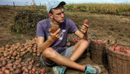 В Беларуси молодые аграрии могут получить отсрочку от армии