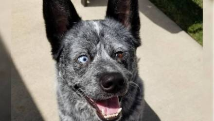 На этих фото самый счастливый пёс, который на самом деле родился без части мозга