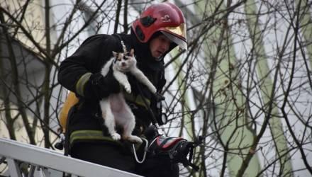 И даже кошку не забыли: как действуют гомельские пожарные в настоящей боевой обстановке