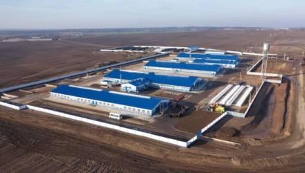 Экспериментальная база «Криничная» открыла на Гомельщине новую молочно-товарную ферму