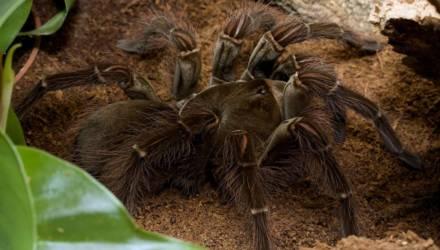 От карликовых до гигантов: удивительный мир пауков приоткроет выставка в Гомеле