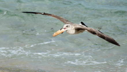 Девушка-фотограф отправилась на калифорнийский пляж поснимать дикую природу. И застала чаек, дерущихся за фаллоимитатор