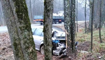 На трассе между Речицей и Светлогорском BMW вылетел в кювет и врезался в дерево