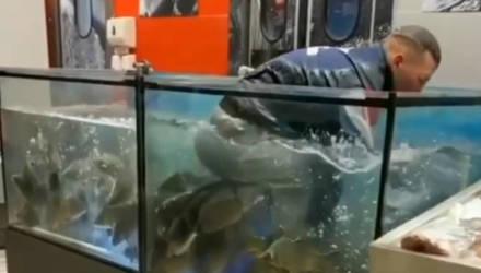 """В Гомеле парень зашёл в ТЦ """"Алми"""" и решил искупаться в аквариуме с живыми рыбами на продажу"""