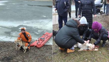 В Гомеле спасатели вытащили провалившуюся под лёд собаку
