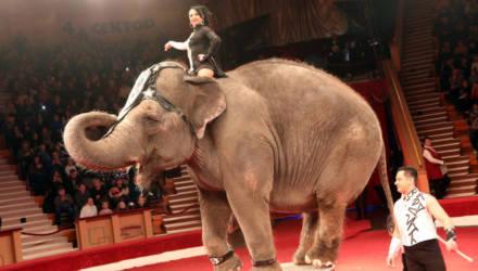 """В Гомельском государственном цирке новая программа """"Индийский слон и карамболь"""""""
