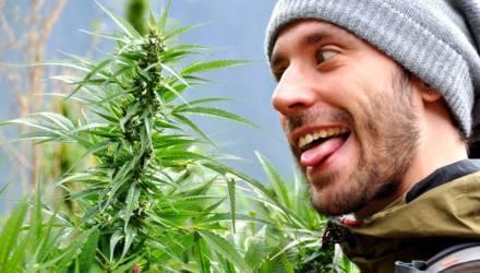 """Гомельчанин хранил в квартире 400 граммов марихуаны, а ещё 12 килограммов """"травы"""" спрятал в Могилёвской области"""