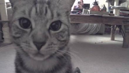 Хозяин установил камеру, чтобы следить за своим котом, но питомец оказался не так прост