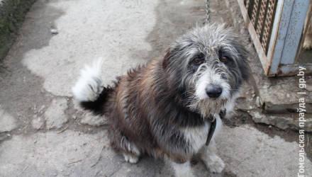 Право на жизнь. Как в Мозыре помогают бездомным животным