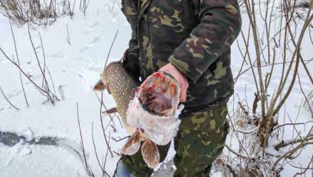 На Гомельщине под Якимовой Слободой рыбаки вытянули щуку весом больше 7,5 кг