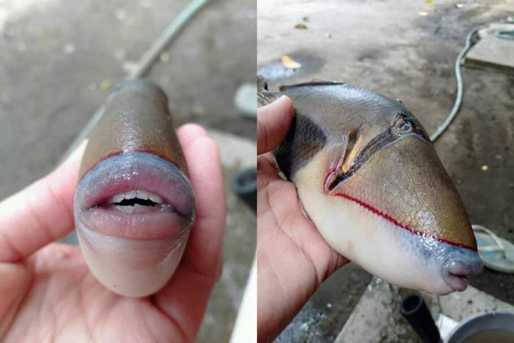"""Рыбак из Мурманска выловил монстра с человеческими губами, и это """"лицо"""" оказалось знакомым многим"""