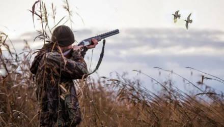 Открыта охота: с 14 марта - на дичь водоплавающую, с 21 марта - на дичь боровую