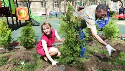 В Гомеле высадили 6767 деревьев