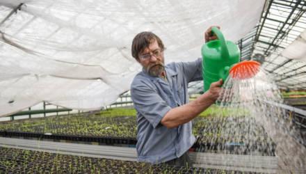 Нынешней весной в Гомеле будет высажено 15 тысяч деревьев и около 400 тысяч цветов