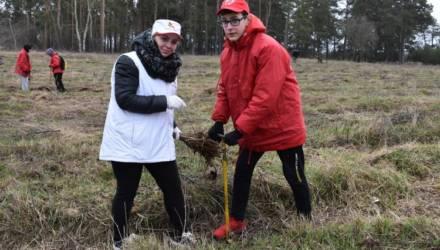 Под Гомелем возле посёлка Знамя Труда посадили лес