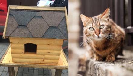 """В Гомеле неравнодушные жители Шведской горки хотели установить """"кошкин дом"""" во дворе, но что-то пошло не так"""
