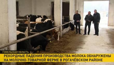 Коров кормили одним силосом. Из-за чего рекордно упали надои на ферме в Гомельской области
