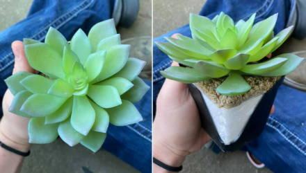 Девушка два года старательно ухаживала за растением — а потом поняла, что оно искусственное