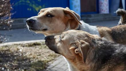 Незаконно и негуманно. В Гомеле прокуратура запретила коммунальникам убивать током бездомных животных