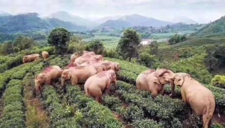 Слоны тайком выпили 30 л вина, и фото, чем закончилось их веселье в деревне, покорило Сеть