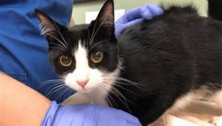 Зарегистрирован первый случай заражения CoViD-19 у кошки, и вот как он сказывается на животных